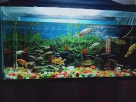 Aquarium 3by 1da