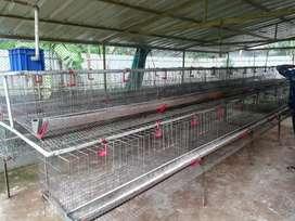 500 birds bv380 cage