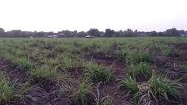 Dijual tanah tanpa perantara, di Kemantren Sidoarjo. Harga nego sopan