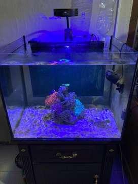 Aquarium Air Laut Nemo Anemon Marine Reef Tank