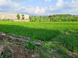 Dijual tanah sawah murah butuh duit