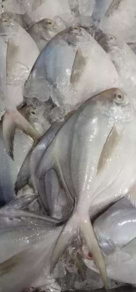 Successfully  running fish hypermarket for sale