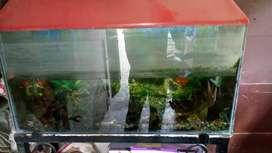 LARGE FISH AQUARIUM
