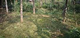 Land for sale in Kooveli, Kattambakku, Kottayam