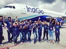 IndiGo Airline hiring Cabin Crew/Ground staff/ticketing in IndiGo Air.