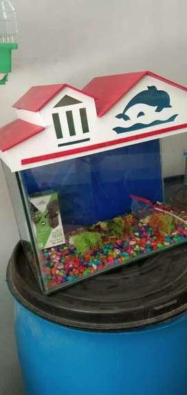 Aquarium all set