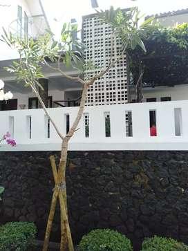 Tukang pohon hias-jual pohon tabebuya bunga ungu dan bunga kuning