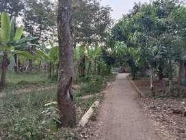 Tanah Kebun Murah Strategis di Wonolopo Ngaliyan