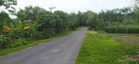 Di jual tanah Luas tepi jl raya Pitu Ngawi
