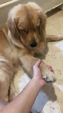 Dicari ART/ Kennel Girl Yang bisa ngurus anjing