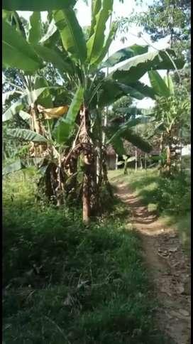 Tanah murah Mangunsari Gunungpati Semarang 800jt luas 2660m2