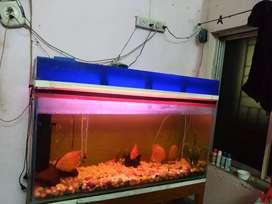 Aquarium fir sell