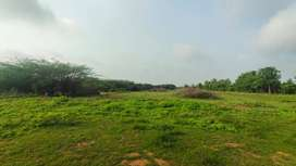16000 per Cent, Low Budget Farm / Agriculture Land near Chennai