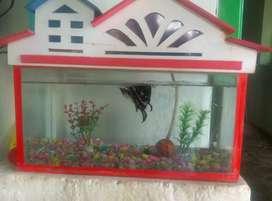 Red colour aquarium