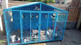 Newly constructed cage for sale 4*7.5 feet