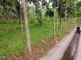Tanah gunung pati - Mijen 4000 untuk kebun/kolam