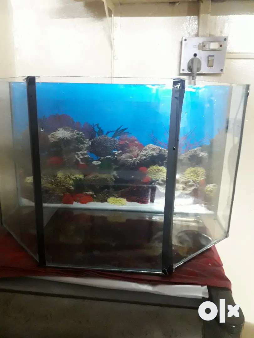 Selas  FISH TANK and Accessories