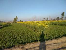 Accessible Agriculture land most suitable for commercial activities.