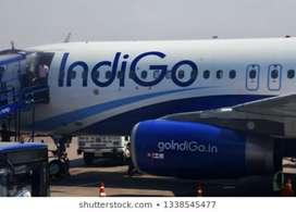 Indigo airlines urgent hiring for ground staff limited seats