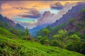 2000 acres of estate and commercial land at munnar tourist area