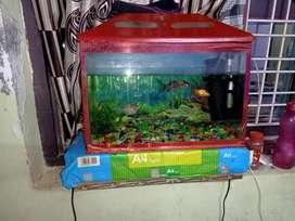 Fish aqriqum