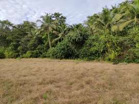Agricultural Land for Lease at Mollem (25000 Sq.M)