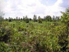 Dijual tanah kosong hrg  300.000 permeter