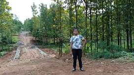 Jual tanah kavling sudah ditanam pohon jati emas free biaya surat