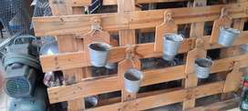 Dekorasi cafe dari kayu pinus