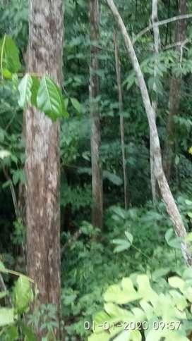 Di Jual  Pohon Jati dan  pohon Sungkai luas Tanah  10.000 Meter/segi