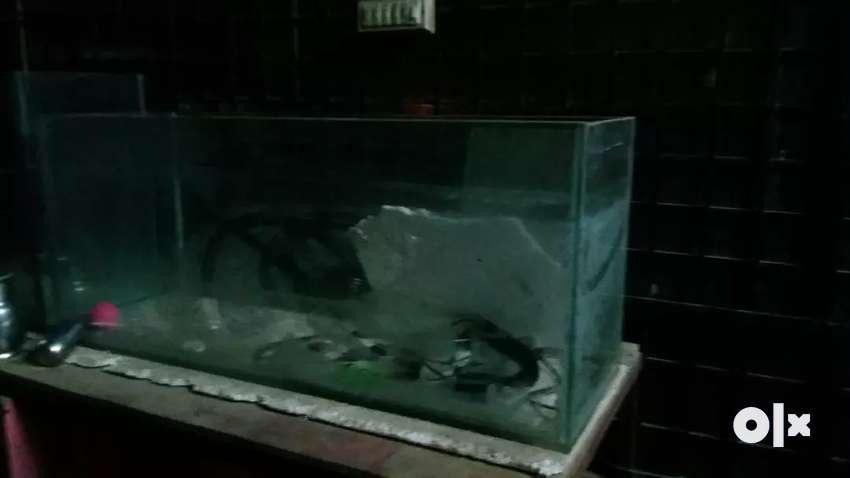 fish aquarium tank 0