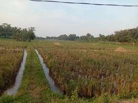 JUAL MURAH Tanah 1 ha di lokasi strategis di Cikopo, Purwakarta