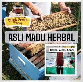 Asli Madu Herbal Madu Hutan Asli Herbal Alami Abadi 1kg
