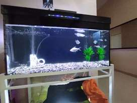 Ikan Arwana Red Tail Golden 25 cm + Aquarium 140cm