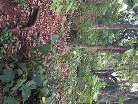 Single owner seaside soil plot at 6 kms from Ratnagiri