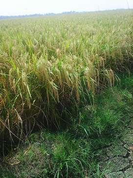 Dijual Sawah luas 6360 daerah cilebar karawang 65ribu/meter