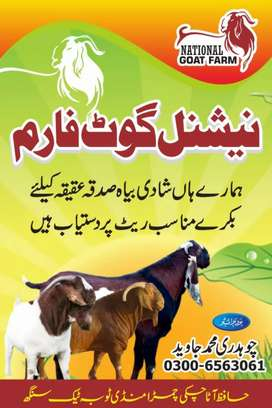 National goat farm toba tek singh