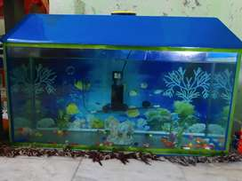 New aquarium include one fish and air pump and filter