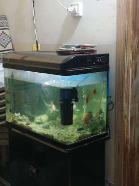 Aquarium with everything for sale