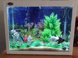 Big size aquarium