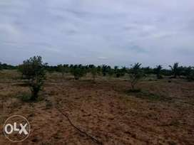 50 cent farm land with group farming and yearly income near Vellakovil