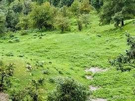 30 bigha land 20,00000 par bigha 90% flat land one time sell