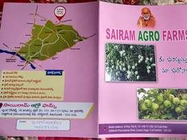 Mango & Thyvan Jama Farms