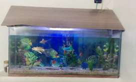 Aquarium for sale with 8 beautiful fish in it. 15 by 35 inch size.