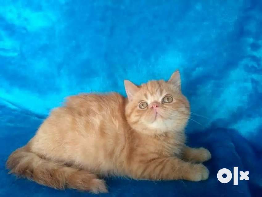 Very friendly cat kitten available 0
