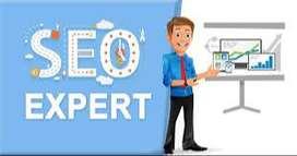 Need Freelance SEO Expert
