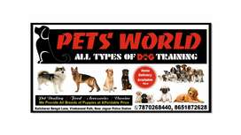 all types pets food and accessories available