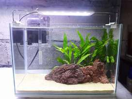 Aquascape cocok untuk ikan tetra, guppy, cupang