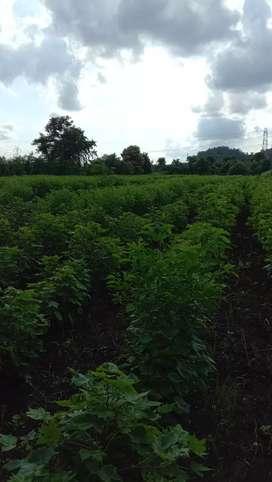 शेती विकणे आहे वर्धा रोड आसोला सावंगी रोड टच