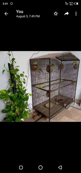 Cage And 15 Astralian Birds For Sale